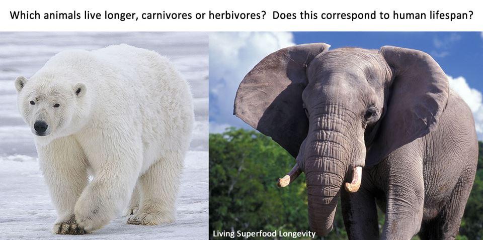 Vegetarian Animals